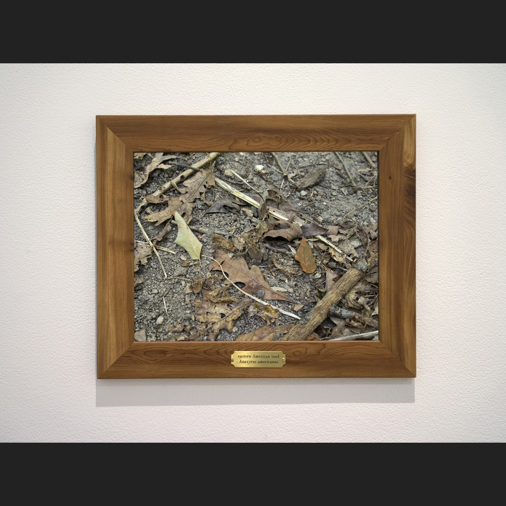 framed photograph of a woodland floor with a camouflaged toad
